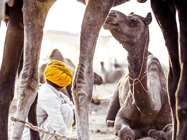 Golden Triangle with Ganga and Pushkar Fair