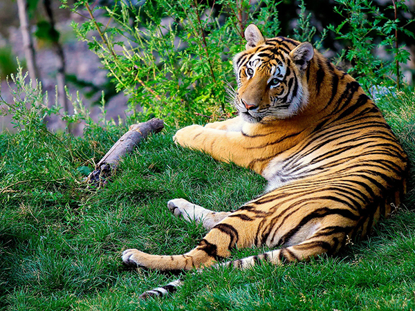 Golden Triangle Tour with Tiger & Lakes