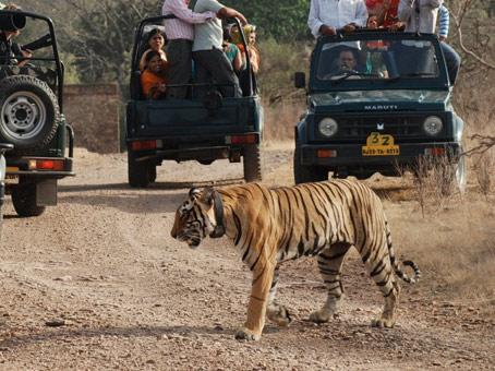 Jaipur – Ranthambore – Jaipur Day Tour